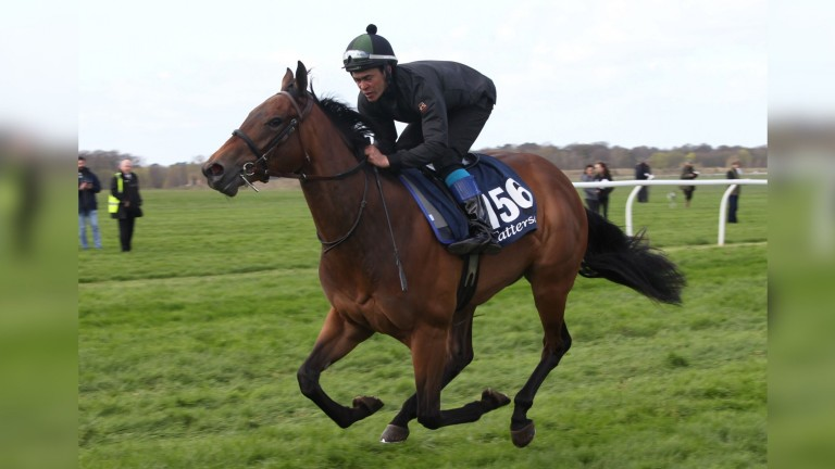 The 280,000gns filly by Dandy Man sold at last week's Tattersalls Craven Sale
