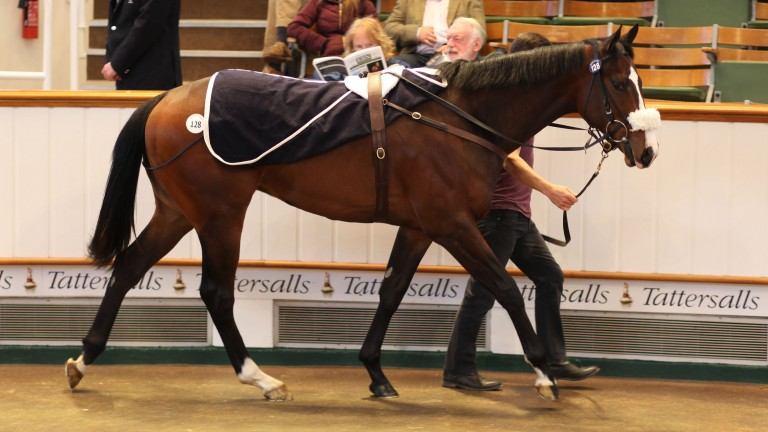 The Swiss Spirit colt sold by Norman Williamson's Oak Tree Farm to Shadwell for 200,000gns