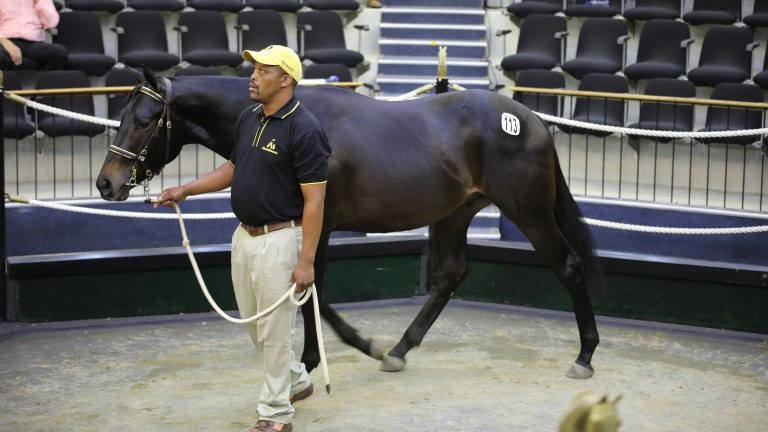Lot 113: the Captain Al colt bought by Jehan Malherbe for R4.75 million