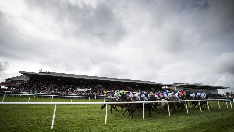 Grey Punchestown: runners on the first circuit of the handicap hurdle