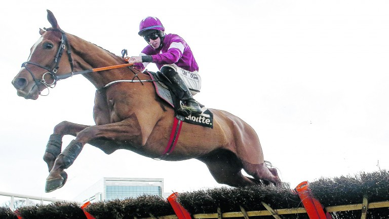 Samcro: steps out of novice company at Punchestown on Friday