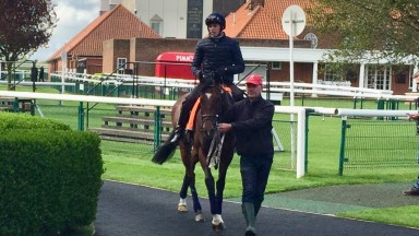 Headway and James Doyle before their workout on the Rowley Mile