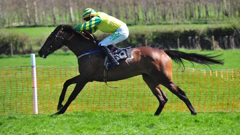 Lecale's Article winning a four-year-old maiden point-to-point at Largy on Sunday