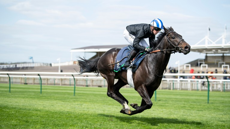 Elarqam: in racecourse gallop action prior to finishing fourth in the 2,000 Guineas, takes aim in the Irish equivalent on Saturday
