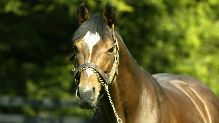 Perennial champion sire Galileo will have six yearling fillies sell next month