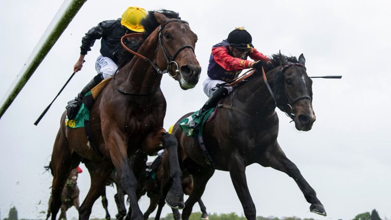 Titanic tussle: Crystal Ocean (left) beats Fabricate in the Group 3 Gordon Richard Stakes at Sandow