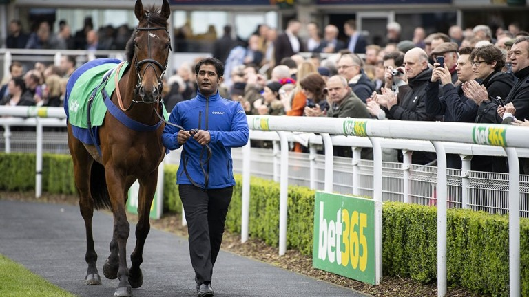 Ears pricked: Cue Card is applauded as he leads the parade of champions in the paddock before racing at Sandown