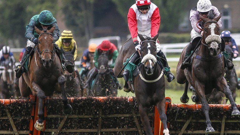 Ballymoy (left): Sandown success on Saturday proved crucial in the jumps sires' title
