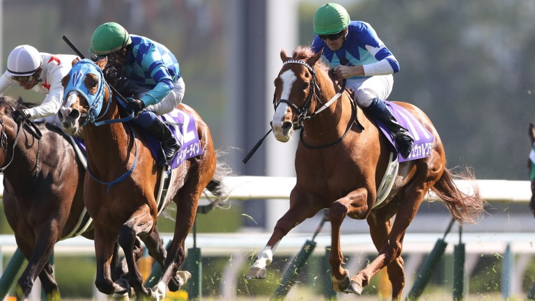 Rainbow Line (middle, 12) powers by Japan Cup winner Cheval Ground (right)