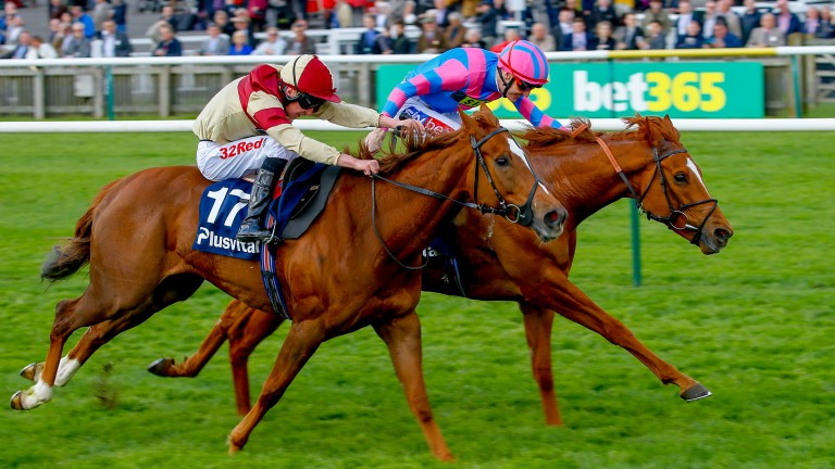 Red Tea (nearside) holds an entry in the Duke of Cambridge Stakes