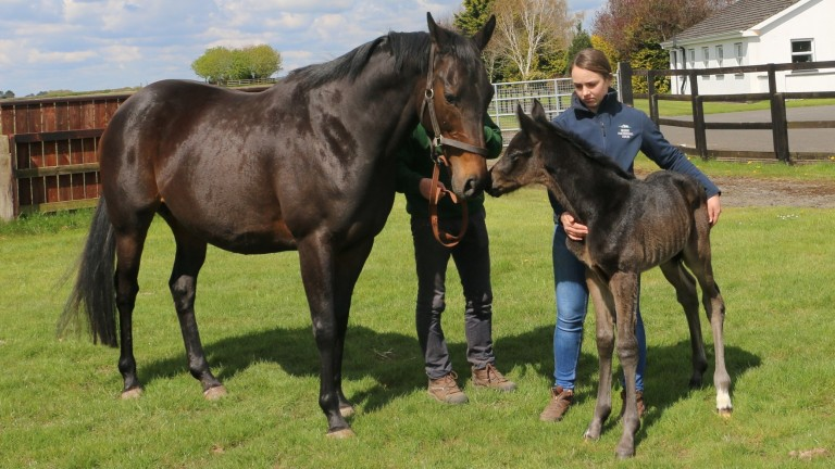 Snow Fairy together with her colt foal by Frankel