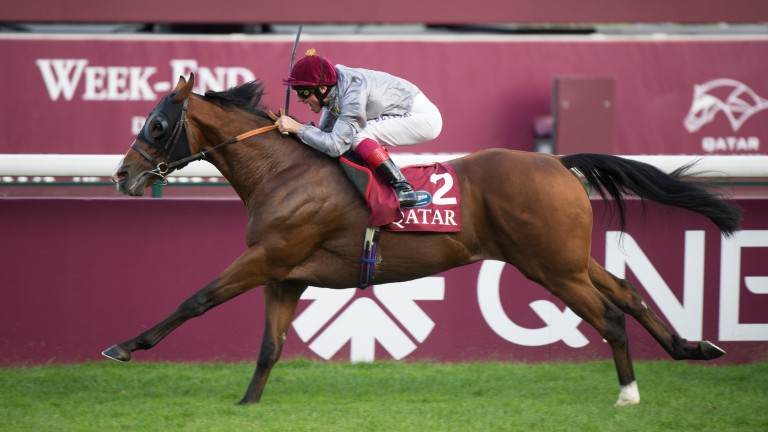 Olympic Glory: four-time Group 1 winner from seven furlongs to a mile