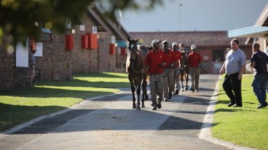 A draft of yealings are led around the Bloodstock South Africa sales ground