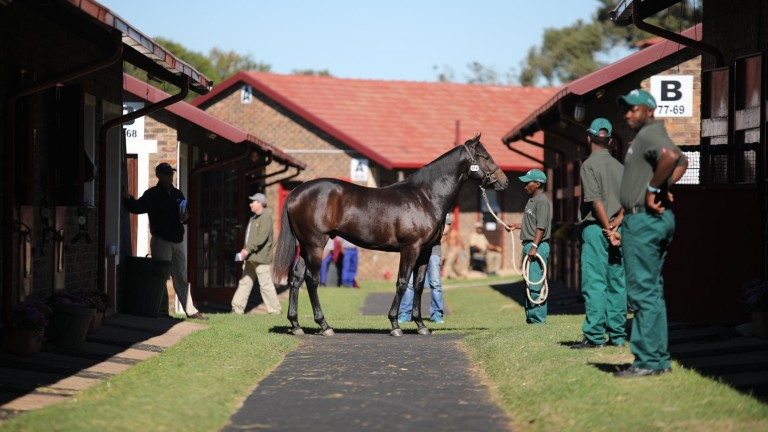 A lot under inspection in Johannesburg