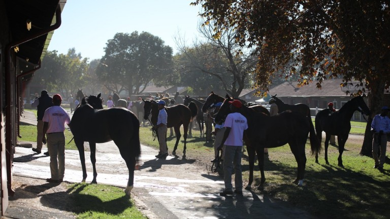 Yearlings are walked in hand before last year's National Yearling Sale