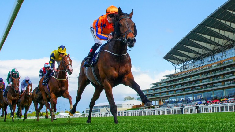 Torcedor: Jessica Harrington's runner is another possible for Melbourne