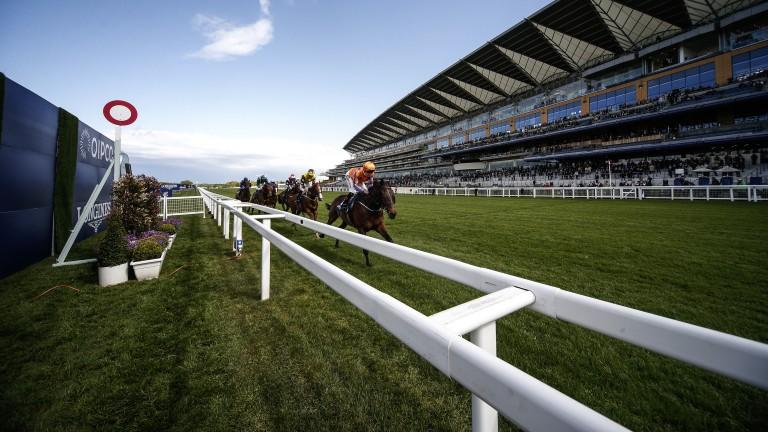 One-horse race: Torcedor runs out an impressive winner of last season's Group 3 Sagaro Stakes