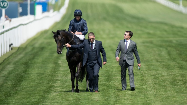 Cliffs Of Moher: finished runner-up in the Derby last season