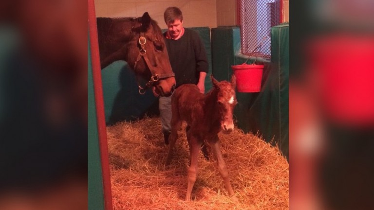 Brendan Gallagher with Drumette shortly after she delivered Monomoy Girl