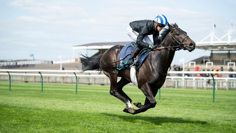 Elarqam during a racecourse gallop at Newmarket