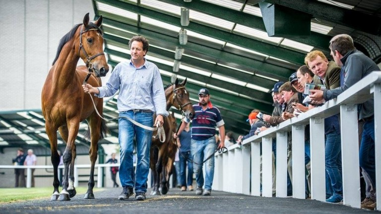 The Goffs Land Rover Sale begins a two-day run at 10am