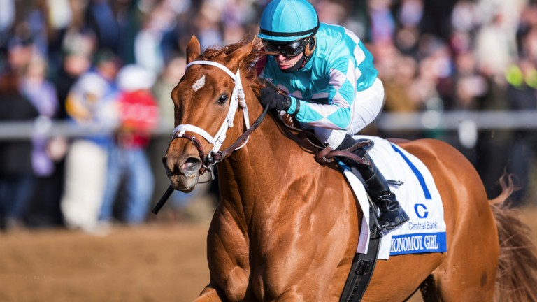 Monomoy Girl: has won four Grade 1 races on the bounce