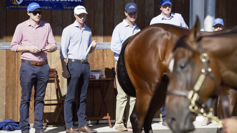 Team Godolphin inspecting at the recent yearling sales in Australia