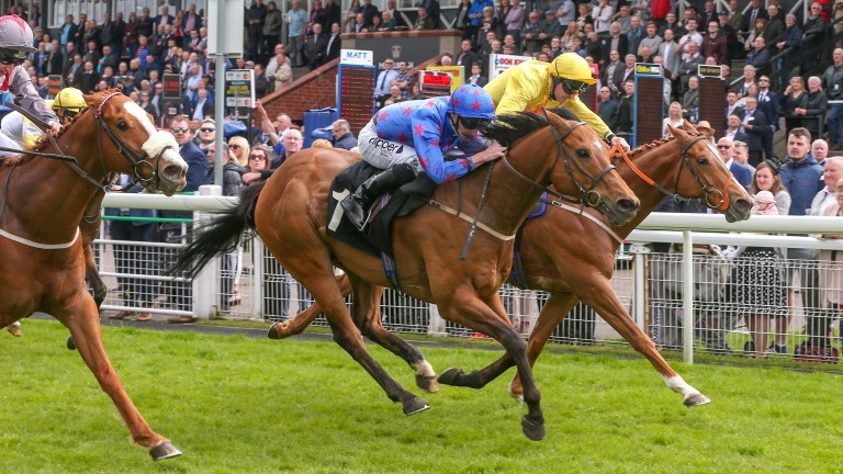 Royal Brave (blue): won under a great ride last time out