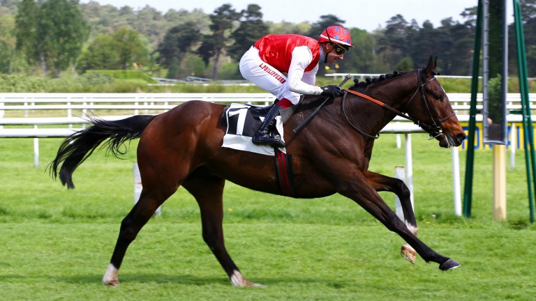 Vision D'Honneur: among the exciting lots on offer at the upcoming Auteuil Sale