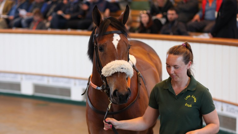 Lot 189: the Tamayuz filly bought by Alastair Donald for 200,000gns