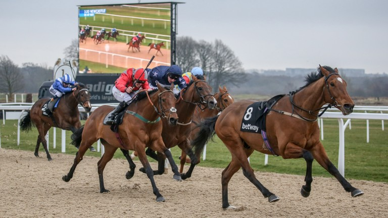Stargazer (red silks) and Island Brave (navy, awarded race) chase home a loose horse at Newcastle