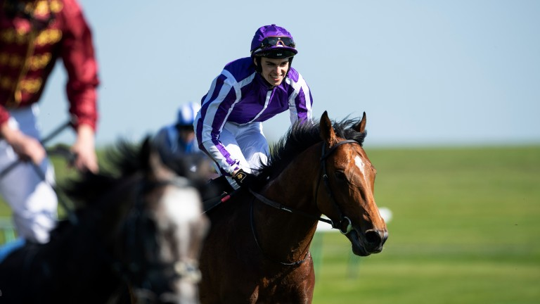 Image result for SAXON WARRIOR HORSE GUINEAS