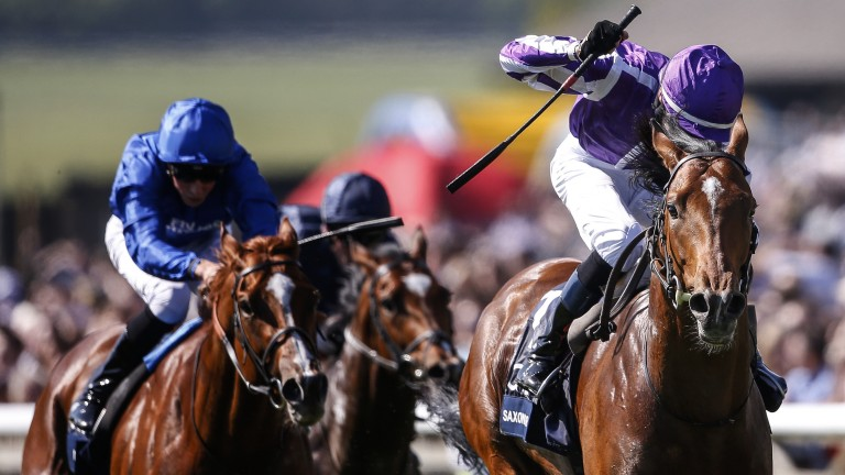 Saxon Warrior: proving popular with punters