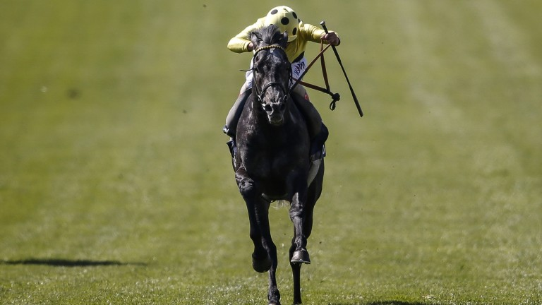 All-out attack: Andrea Atzeni winds up Defoe as the grey successfully lands the odds in the Jockey Club Stakes