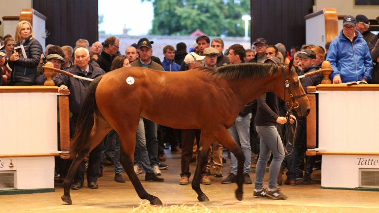 Fairyland drew plenty of admirers when she was sold as a yearling at Tattersalls