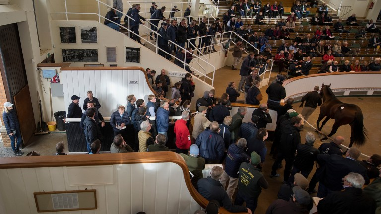 The famous Tattersalls sales ring