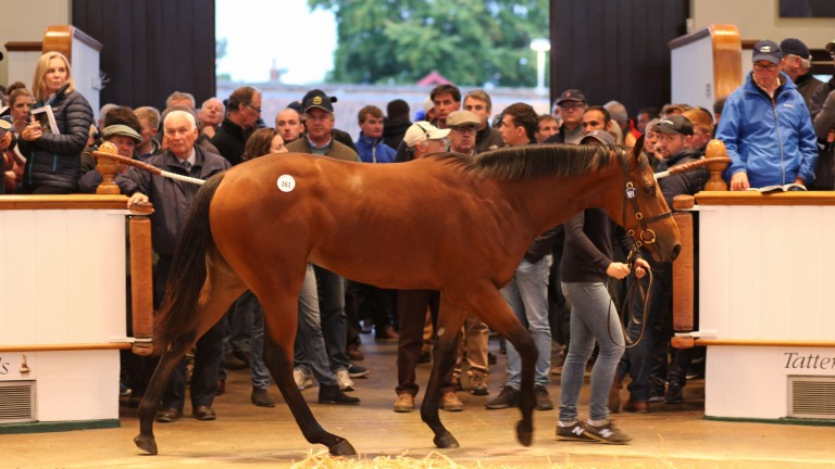 Fairyland drew plenty of interest when fetching 925,000gns in the Tattersalls ring