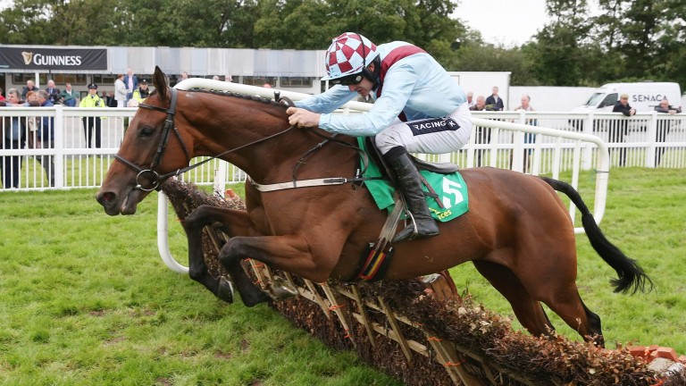 Screaming Rose: will be a warm order for Willie Mullins in the finale