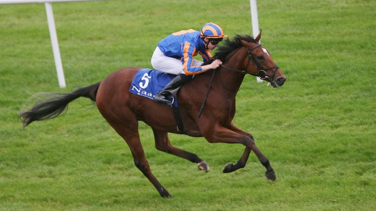 Dramatically: one of three runners for Aidan O'Brien in the Cheshire Oaks