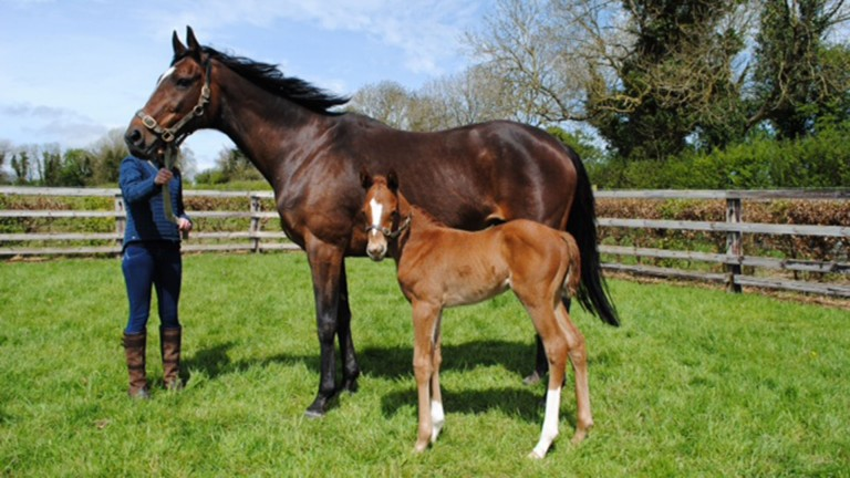 Tiger Roll's dam Swiss Roll with her newborn filly by Exceed And Excel