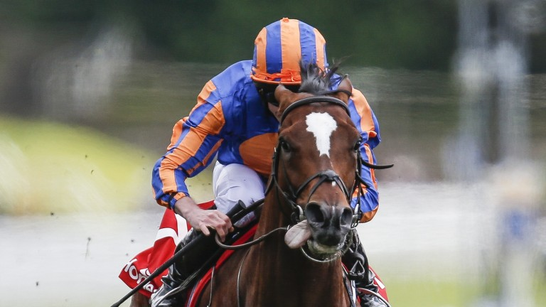 Rostropovich: has been given a break since the Irish Derby