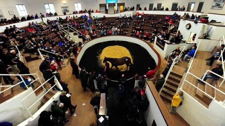 A total of 466 lots are catalogued for this year's Tattersalls Ireland Derby Sale