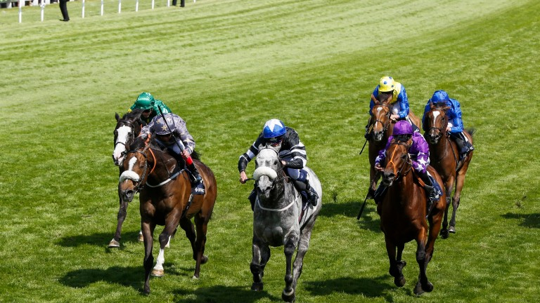 Sovereign Debt (grey): a winner of the Diomed Stakes on Derby day last year
