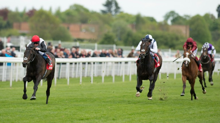 Golden Horn (left) storms home from Jack Hobbs (centre) and Elm Park