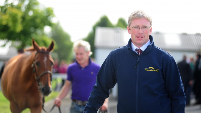 "Neil Walsh: ""I think it will take a very good young horse to lower the colours of two Tattersalls Ireland graduates Native River and Sizing John"""