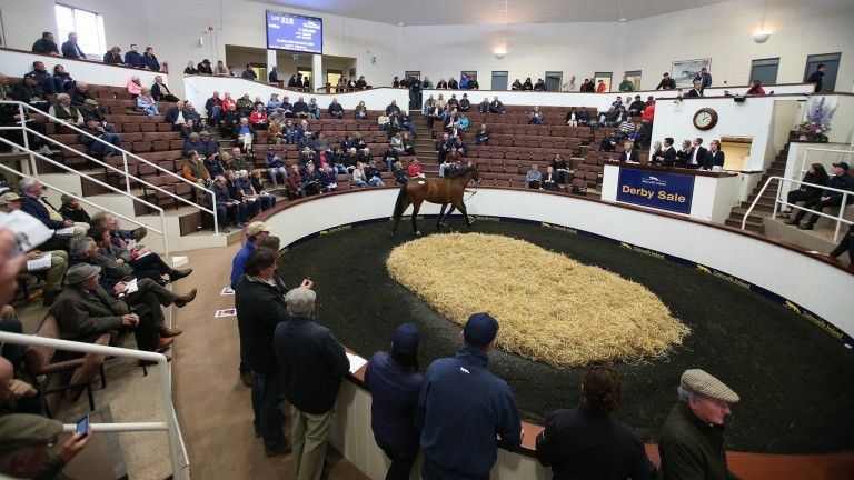 The Tattersalls Ireland sales ring
