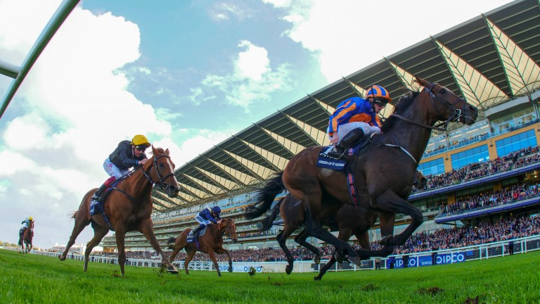 Order Of St George: a sire in demand at Tattersalls Ireland November National Hunt Sale