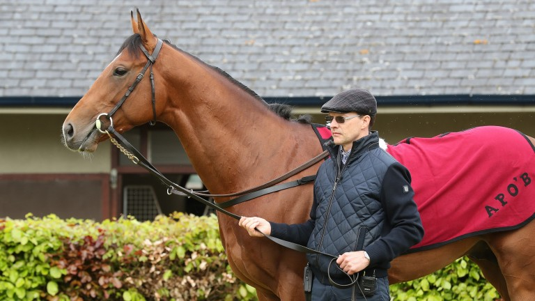 Aidan O'Brien, pictured with the Investec Derby favourite Saxon Warrior