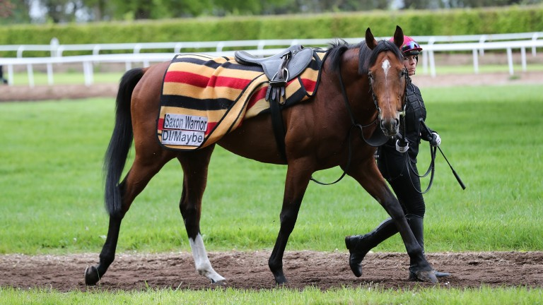 Saxon Warrior cools down after exercise at Ballydoyle