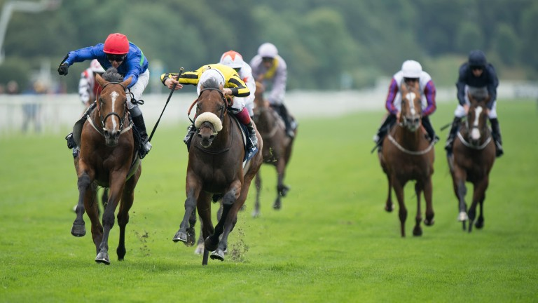 Wells Farhh Go (left): the son of Farhh wins the Acomb Stakes at York